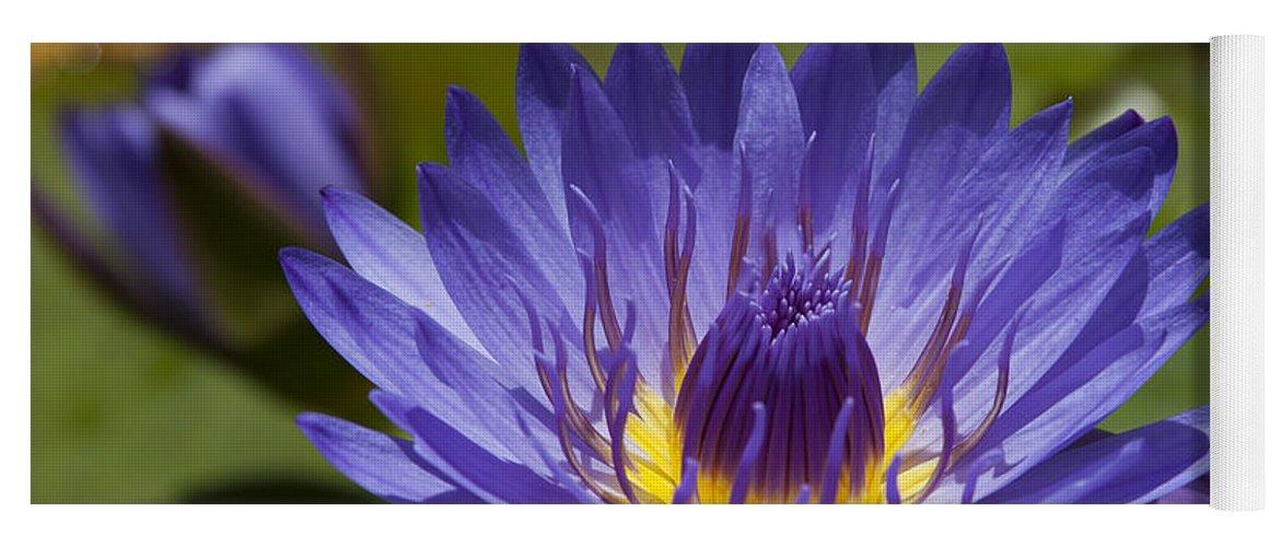 La Fleur De Lotus Star Of Zanzibar Tropical Water Lily Yoga Mat