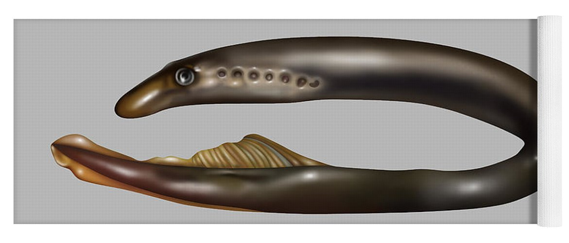 Nature Yoga Mat featuring the photograph Lamprey Eel, Illustration by Gwen Shockey