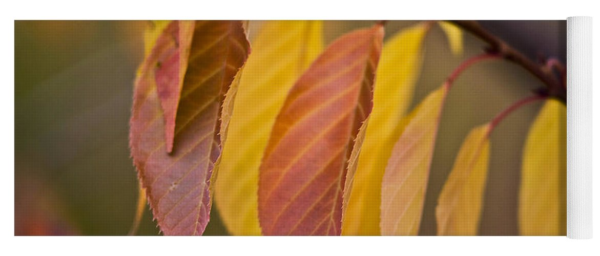 Heiko Yoga Mat featuring the photograph Leaves In Fall by Heiko Koehrer-Wagner