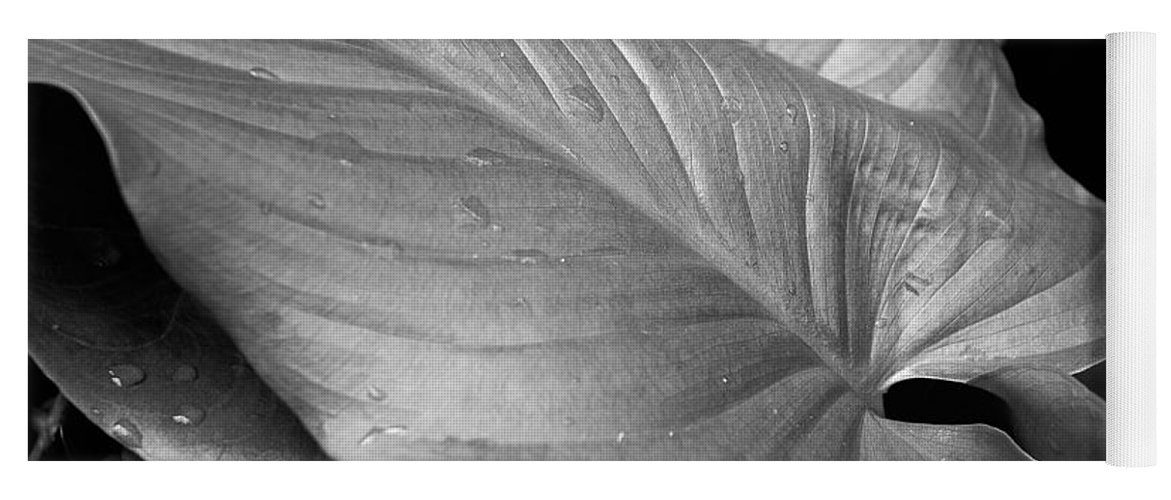 Black And White Yoga Mat featuring the photograph Lily Leaf by Mick Burkey