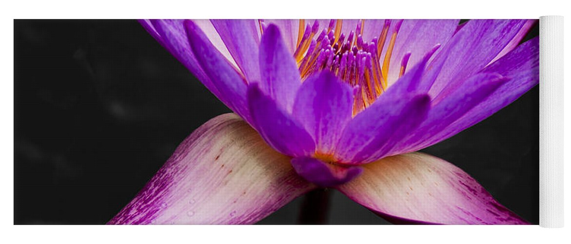 3scape Yoga Mat featuring the photograph Lotus by Adam Romanowicz