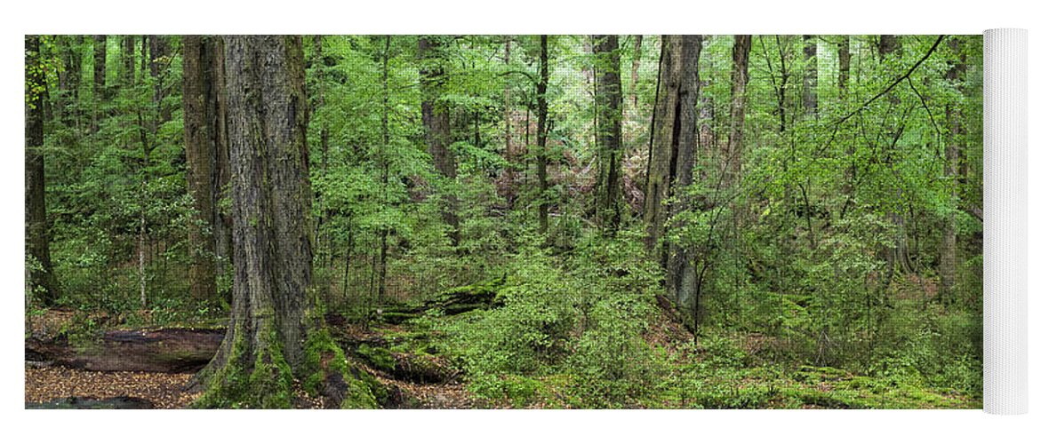 Photography Yoga Mat featuring the photograph Moss Covered Trees In Forest, Lord by Panoramic Images