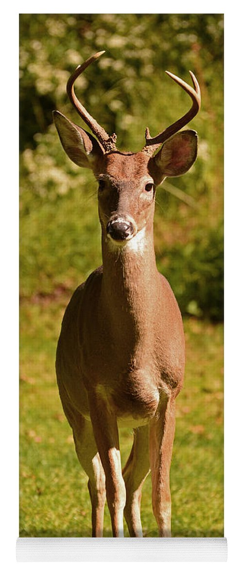 Deer Yoga Mat featuring the photograph My Little Buddy by Lori Tambakis
