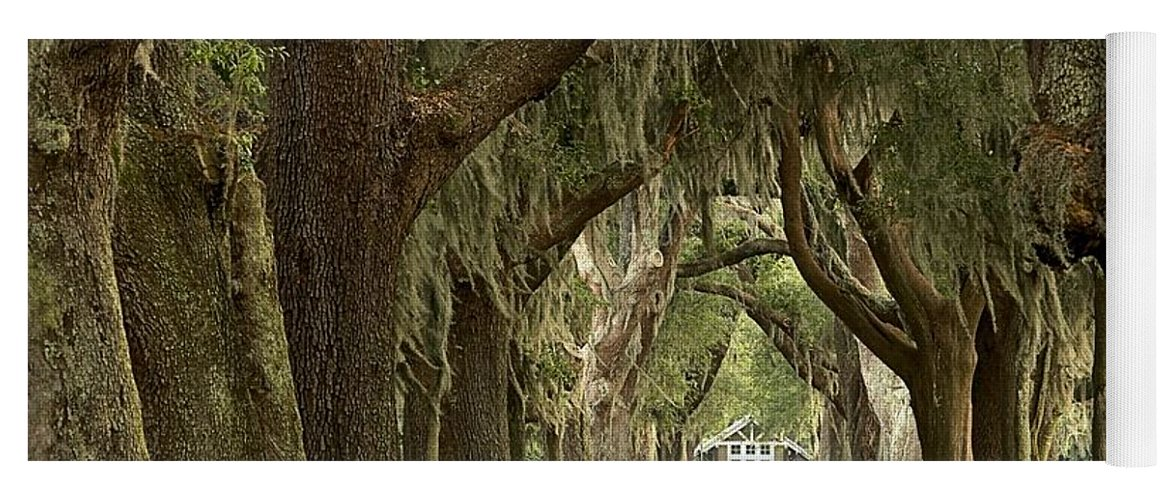 Avenue Of The Oaks Yoga Mat featuring the photograph Oaks Of The Golden Isles by Adam Jewell