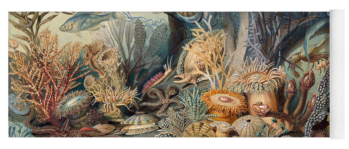 Ocean Life Yoga Mat featuring the painting Ocean Life, 1859 by Metropolitan Museum of Art