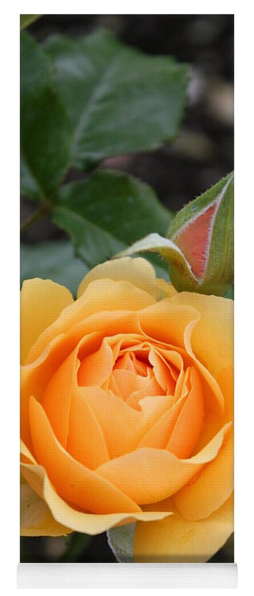 Rose Yoga Mat featuring the photograph Perfect Rose by Christiane Schulze Art And Photography