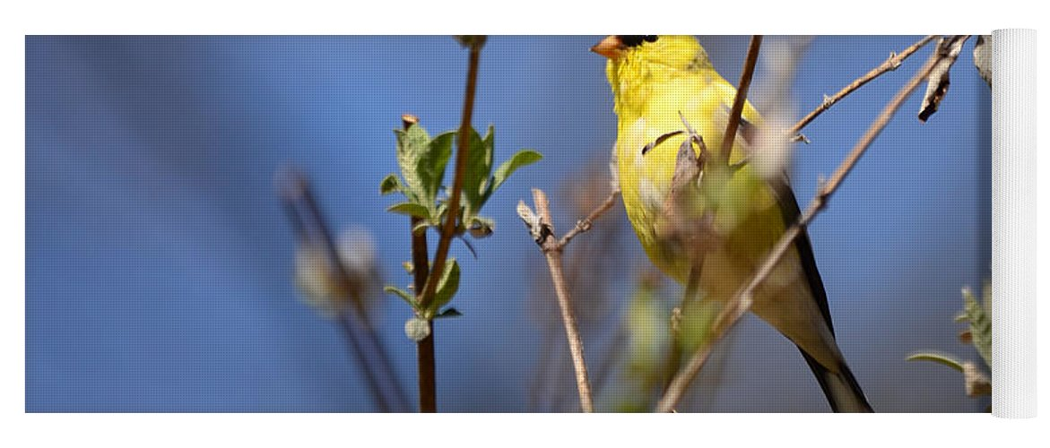 Goldfinch Yoga Mat featuring the photograph Perfect Shade Of Yellow by Lori Tambakis