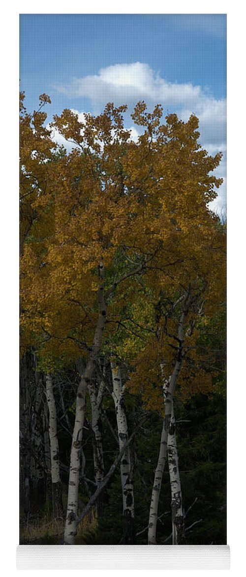Gold Yoga Mat featuring the photograph Quaking Aspen by Frank Madia