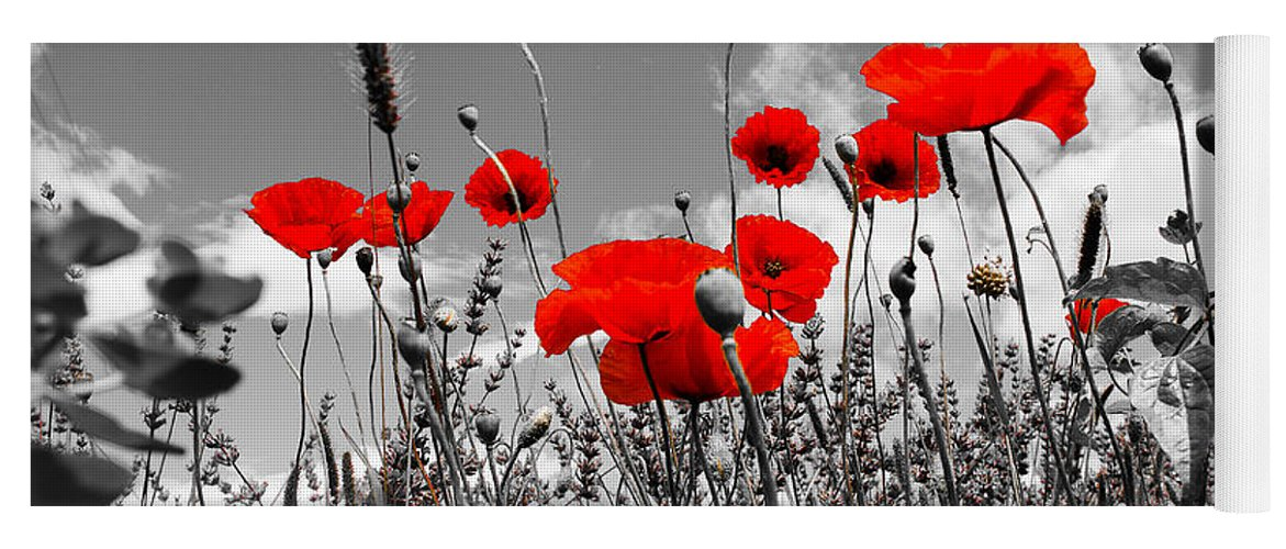 Red poppies on black and white background yoga mat for sale by dany red poppies on white and black background yoga mat featuring the photograph red poppies on black mightylinksfo