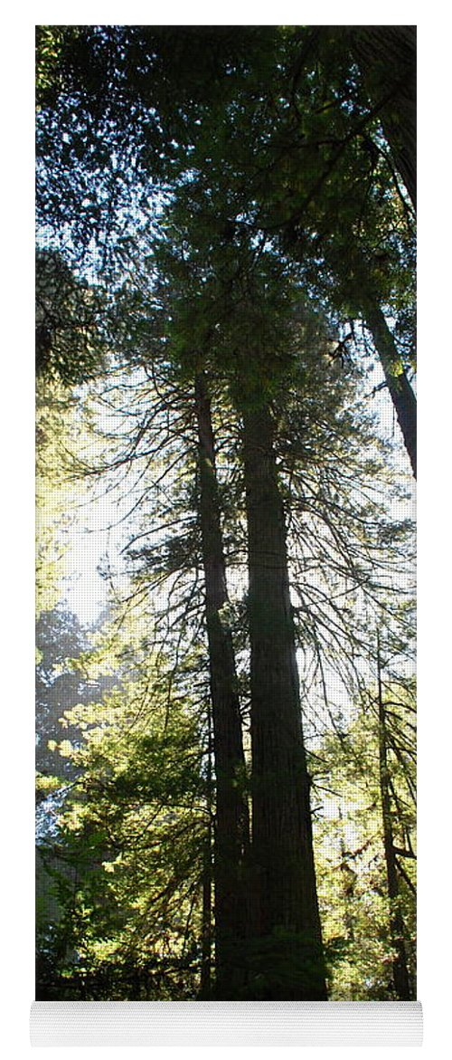 Redwoods Yoga Mat featuring the photograph Redwoods IIII by Kathy Sampson