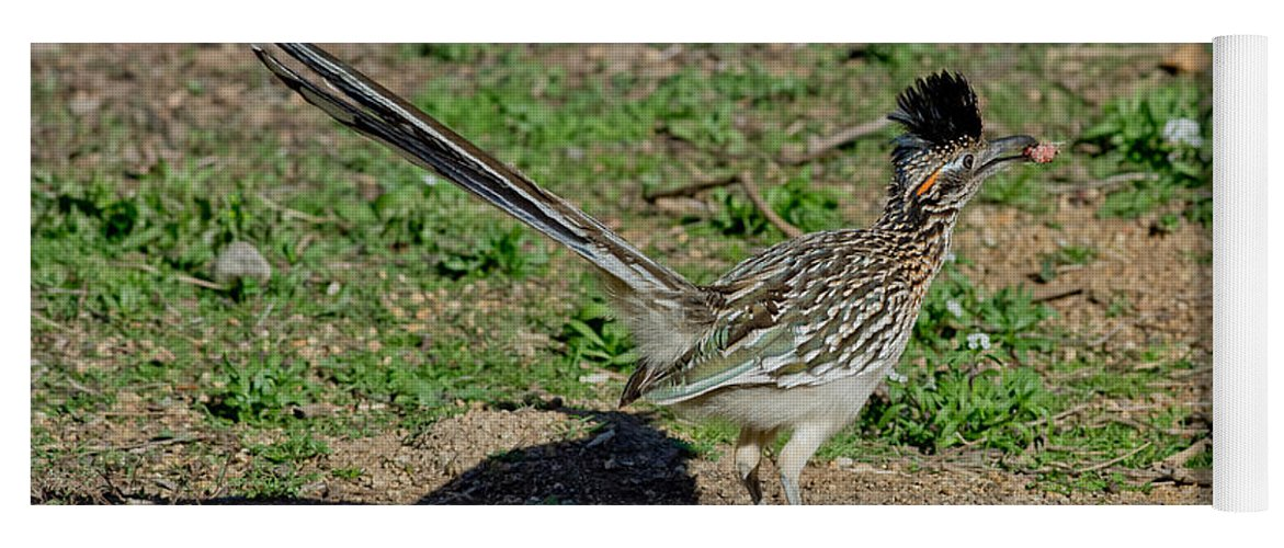 Animal Yoga Mat featuring the photograph Roadrunner Male With Food by Anthony Mercieca