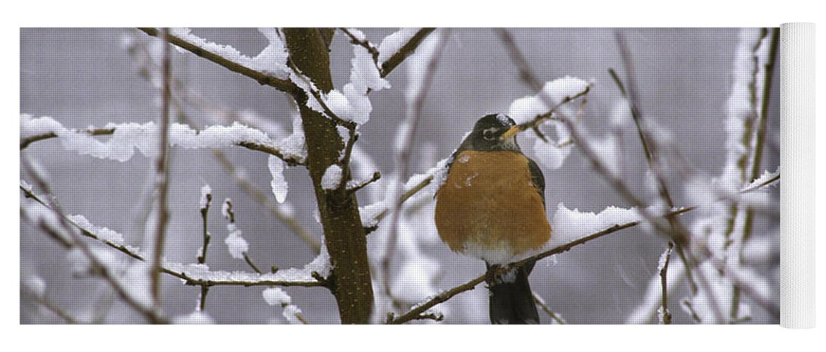 American Robin Yoga Mat featuring the photograph Robin In Snow by Novastock
