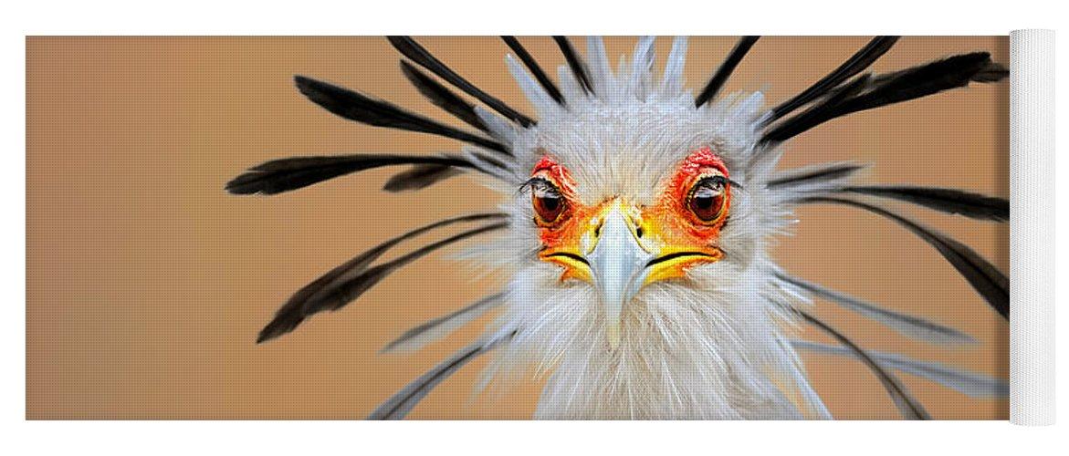 Bird Yoga Mat featuring the photograph Secretary bird portrait close-up head shot by Johan Swanepoel