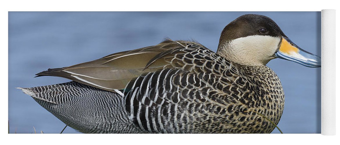 Nature Yoga Mat featuring the photograph Silver Teal by John Shaw