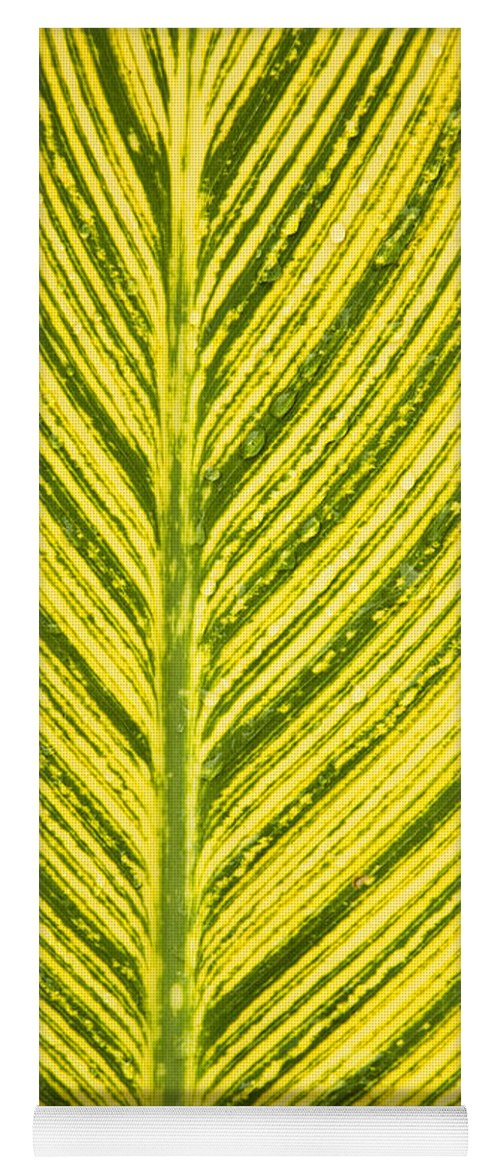 Simple Yoga Mat featuring the photograph Simple Stripes by Marilyn Hunt