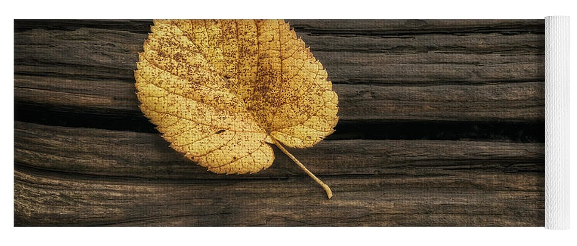 Leaf Yoga Mat featuring the photograph Single Yellow Birch Leaf by Scott Norris