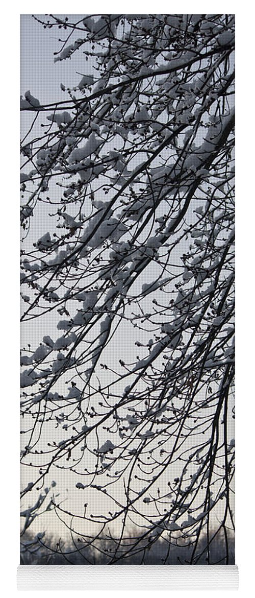 Snow Yoga Mat featuring the photograph Snow Covered Branches by Teresa Mucha