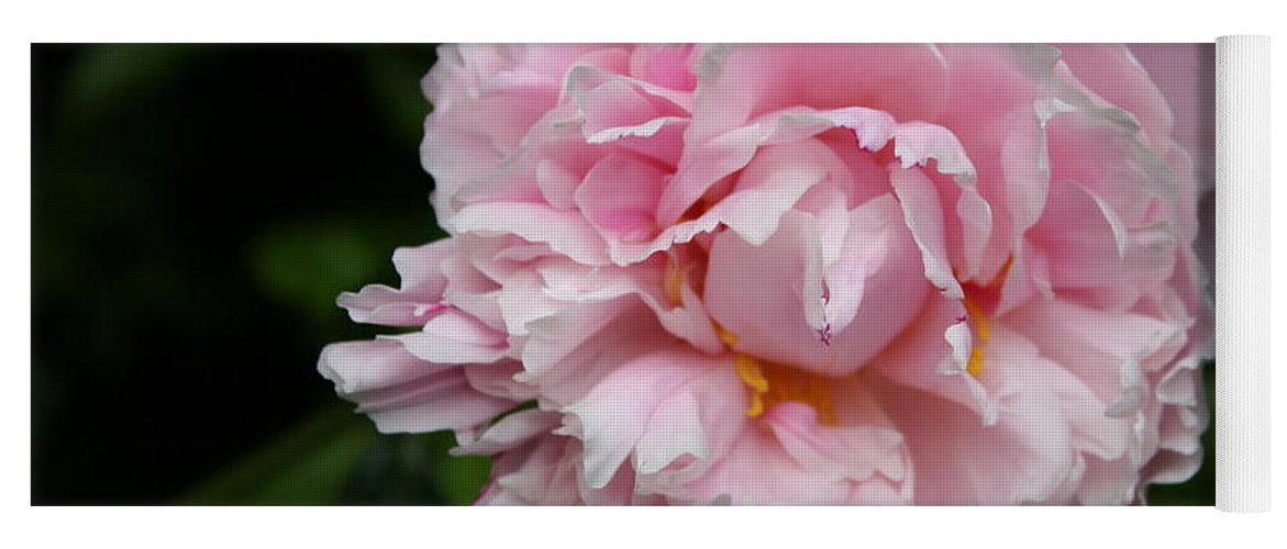 Peony Yoga Mat featuring the photograph Spring In Pink by Christiane Schulze Art And Photography