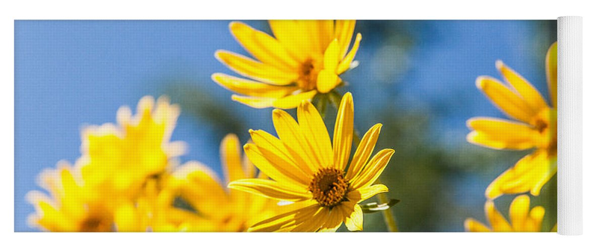 Flowers Yoga Mat featuring the photograph Sunshine by Chad Dutson