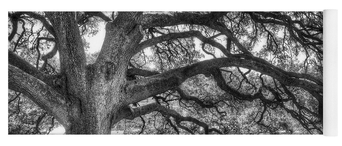 Tree Yoga Mat featuring the photograph The Century Oak by Scott Norris