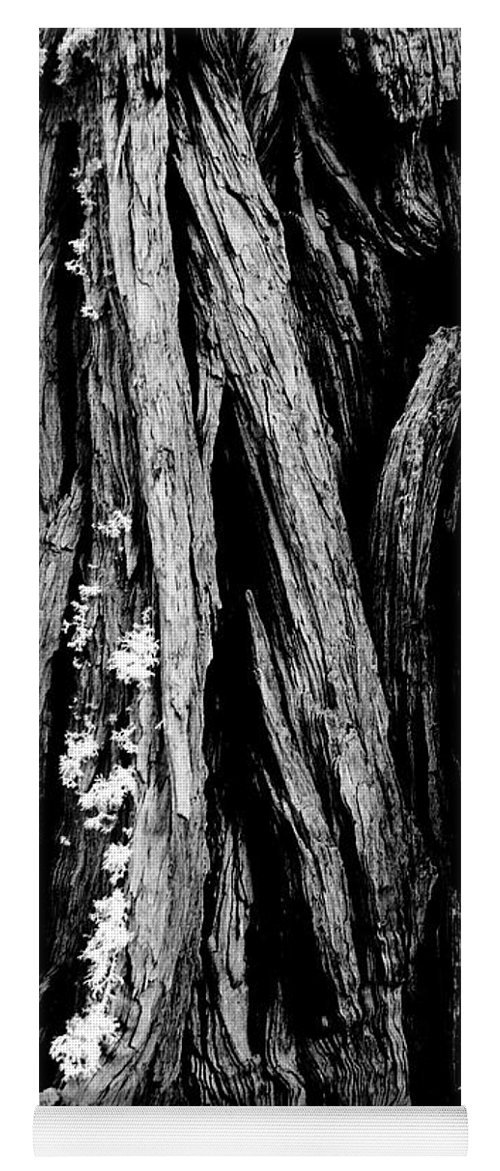 Tree Yoga Mat featuring the photograph Tree Lines by Mick Burkey