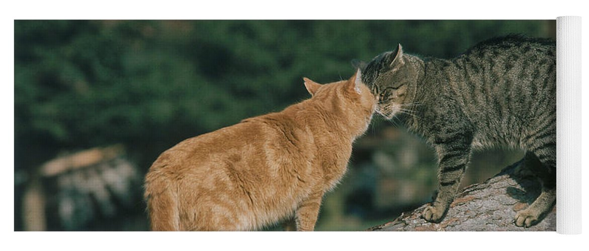 Two Cats Nuzzling Heads Yoga Mat