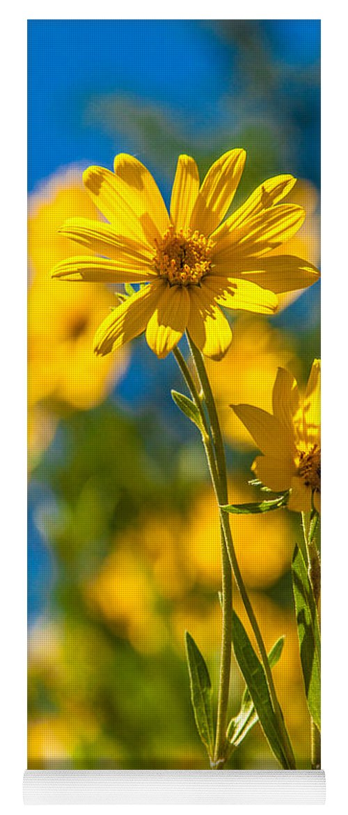 Flowers Yoga Mat featuring the photograph Wildflowers Standing Out by Chad Dutson