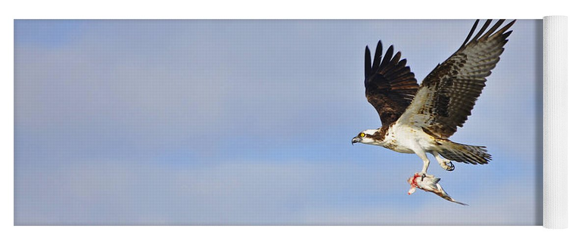 Osprey Yoga Mat featuring the photograph Osprey Lunch To Go II by Christine Stonebridge