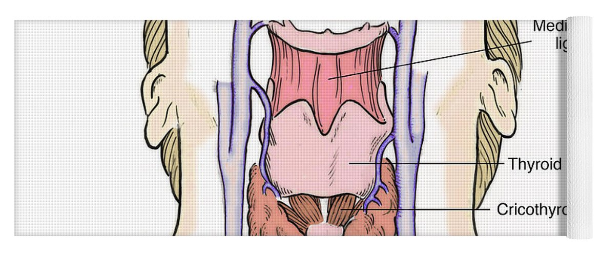Illustration Of Throat Anatomy Yoga Mat for Sale by Science Source