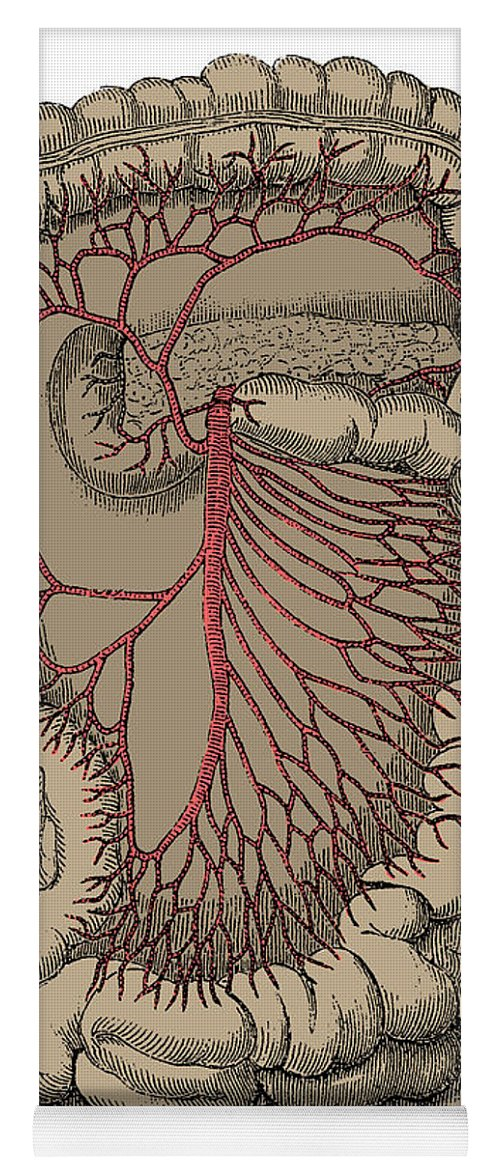 Superior Mesenteric Artery Yoga Mat For Sale By Science Source