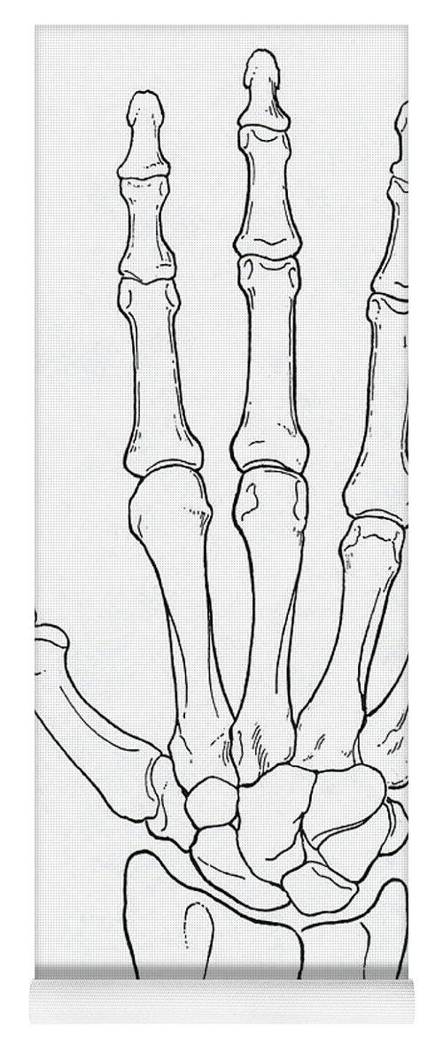 Fantastisch Anatomie Der Hand Und Arm Galerie - Anatomie und ...