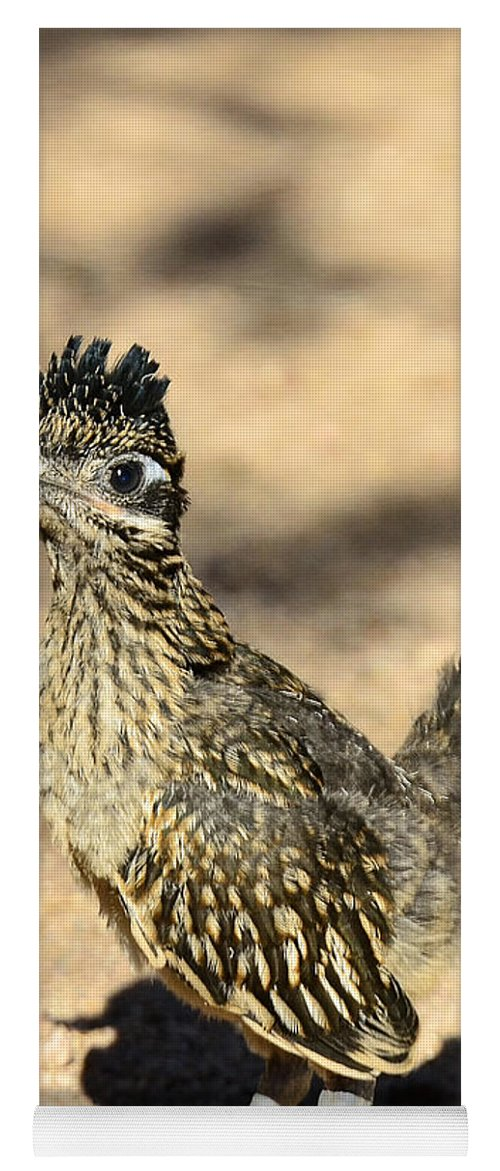 Greater Roadrunner Yoga Mat Featuring The Photograph A Baby By Saija Lehtonen
