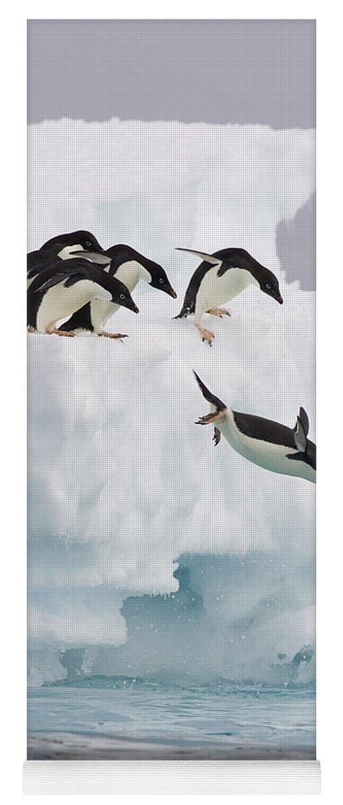 00761831 Yoga Mat featuring the photograph Adelie Penguin Diving Antarctica by Suzi Eszterhas