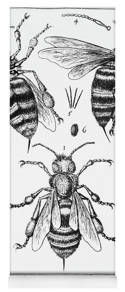 Bee Anatomy Historical Illustration Yoga Mat for Sale by SPL and ...