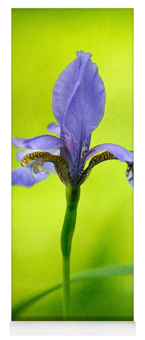 Iris Yoga Mat featuring the photograph Blue Japanese Iris by Lois Bryan