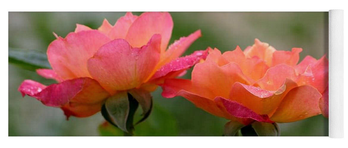 Roses Yoga Mat featuring the photograph Broadway by Living Color Photography Lorraine Lynch
