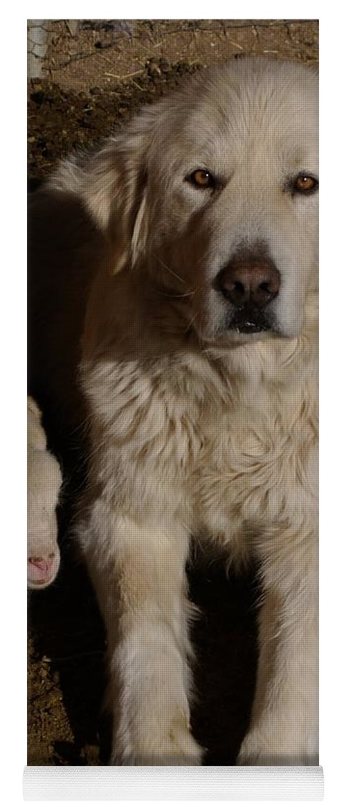 Great Pyrenees Yoga Mat featuring the photograph Close Personal Protection by Charles and Melisa Morrison