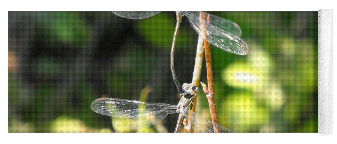 Dragonflies Yoga Mat featuring the photograph Dragonflies by Paulina Roybal