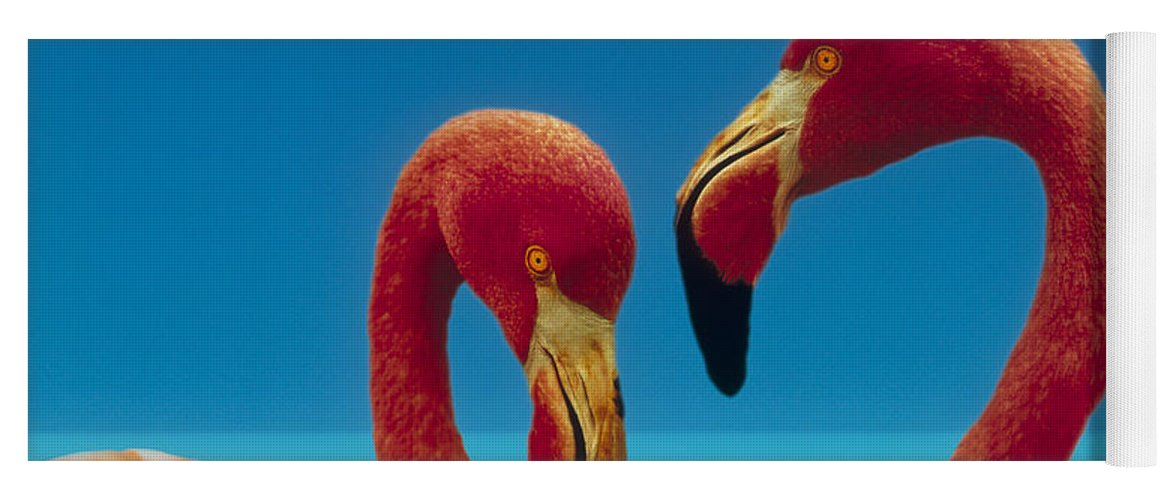 00172310 Yoga Mat featuring the photograph Greater Flamingo Courting Pair by Tim Fitzharris