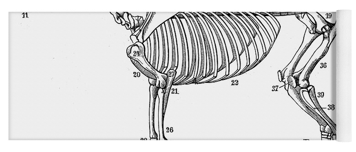 Horse: Bone Structure Yoga Mat for Sale by Granger