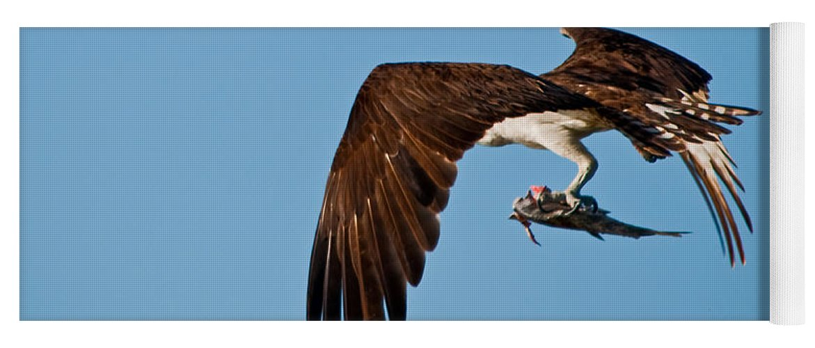 Osprey Yoga Mat featuring the photograph I Picked Up Take-Out by Christine Stonebridge