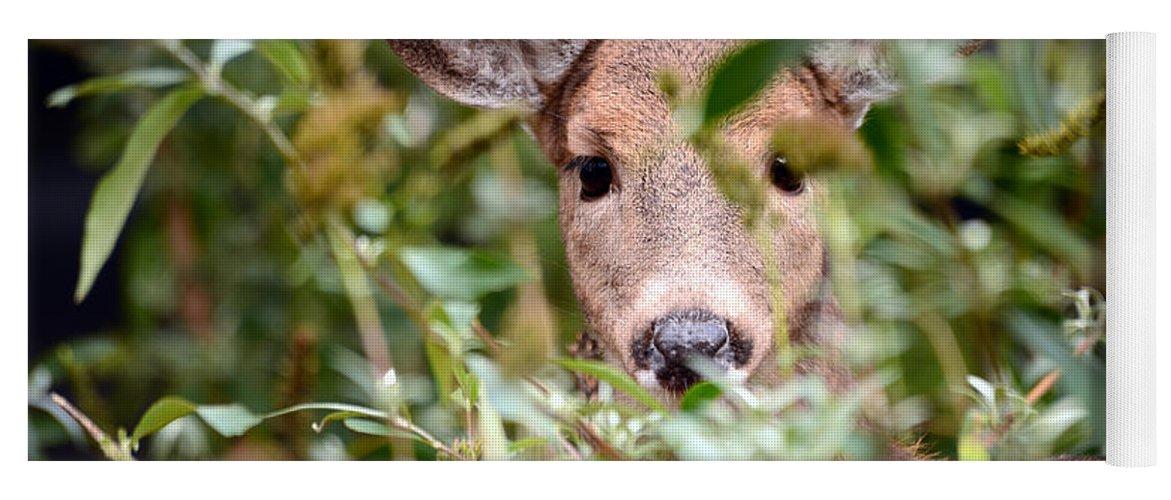 Deer Yoga Mat featuring the photograph Look What I Found In My Garden by Lori Tambakis