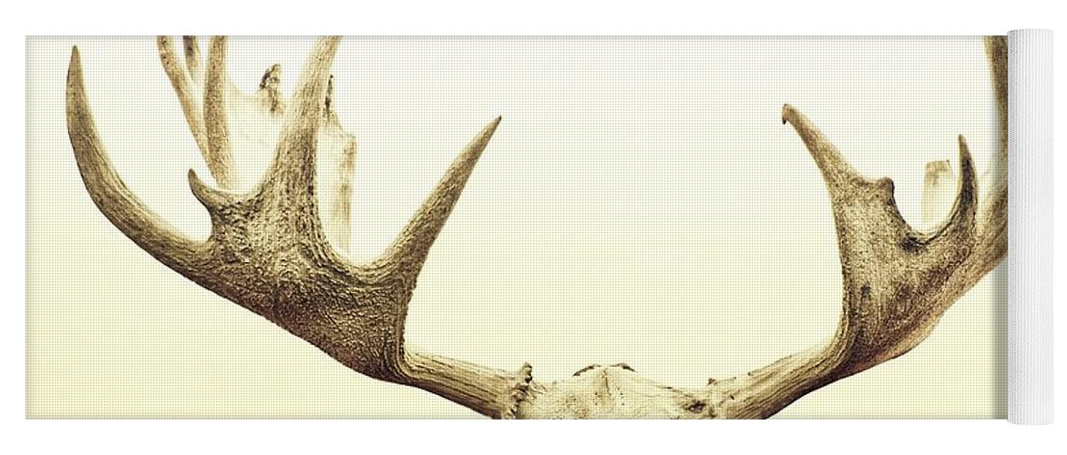 Moose Yoga Mat featuring the photograph Moose Trophy by Priska Wettstein