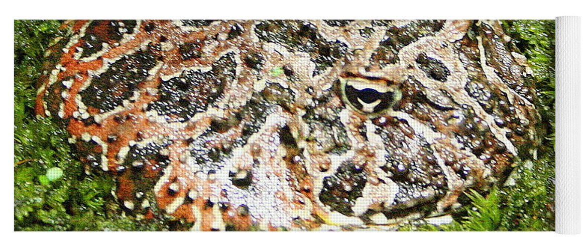 Ceratophrys Ornata Yoga Mat featuring the photograph Ornate Horned Frog by Laurel Talabere