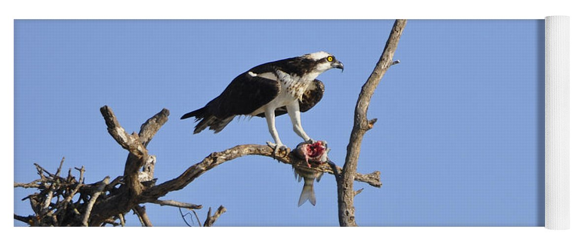 Osprey Yoga Mat featuring the photograph Osprey with Catch II by Christine Stonebridge