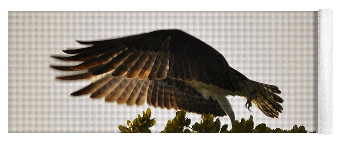 Osprey Taking Flight Yoga Mat featuring the photograph Poetry in Motion by Christine Stonebridge