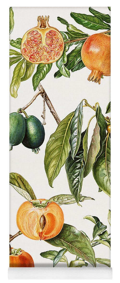 Feijoa; Date Plum; Chinese; Persimmon; Kumquat; Botanical; Fruit; Pomegranate; Leaf; Leafs; Date Plums; Persimmons; Kumquats; Feijoas; Pomgranates Yoga Mat featuring the painting Pomegranate And Other Fruit by Elizabeth Rice