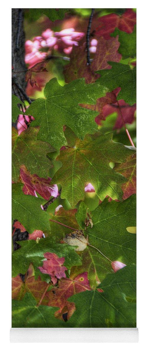 Autumn Yoga Mat featuring the photograph Signs Of Autumn by Saija Lehtonen