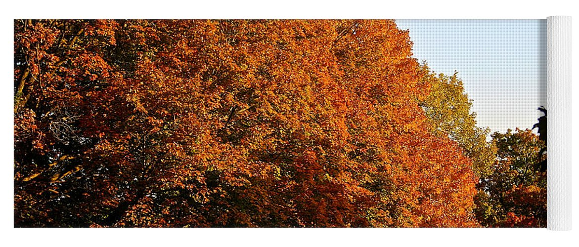Outdoors Yoga Mat featuring the photograph Sugar Maple by Susan Herber