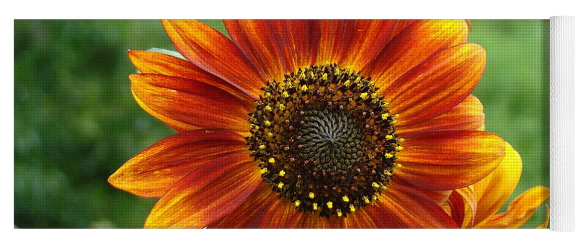 Red Sunflower Yoga Mat featuring the photograph Sunflower by Lisa Rose Musselwhite